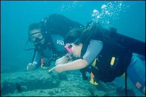 Diving - Mergulho na laje de Santos