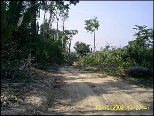 Clube do Tracker !!-estado-da-floresta.jpg