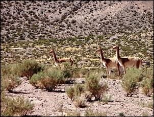 Norte da Argentina (Salta, Purmamarca, Cafayate) e Chile (Atacama) em 10 dias-cuesta-lipan4.jpg