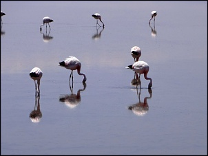 Norte da Argentina (Salta, Purmamarca, Cafayate) e Chile (Atacama) em 10 dias-spa-r-n-flamingos-2.jpg