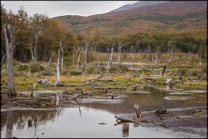 Patagônia - 14 mil km > Ushuaia, TDP, El Calafate, El Chalten, Carretera, Bariloche-dsc_2185.jpg