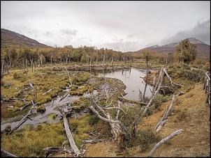 Patagônia - 14 mil km > Ushuaia, TDP, El Calafate, El Chalten, Carretera, Bariloche-gopr4673.jpg