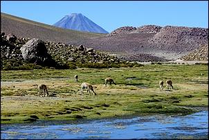 Altiplano 2016 - Peru e Chile via Acre-img_4469.jpg